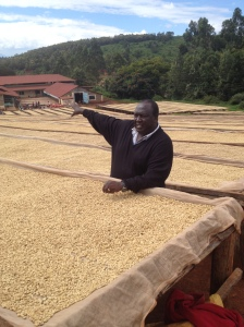 The farm manager with the coffee that is dried for three days after being washed and the husks removed